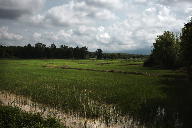 View of the rice fields surrounding the Pak Ok village, near Lom Sak, northern Thailand.<br /> Lom Sak, Petchabun province, Thailand. Aug 25 2014<br /> Credit : Giorgio Taraschi for The New York Times