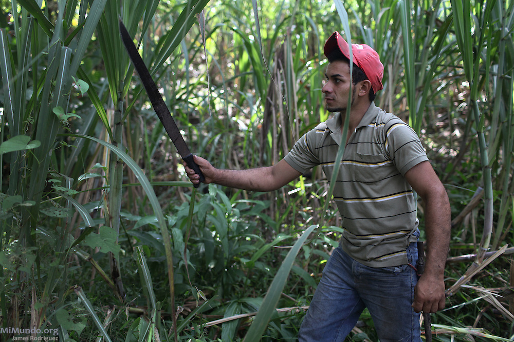 Guillermo Valverde Elizondo, ASOPRODULCE cooperative member, cleans his sugar cane field from dried leaves and other invasive weeds. ASOPRODULCE, Jaris de Mora, San José, Costa Rica. August 25, 2012.