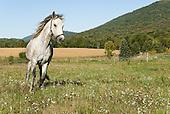 Horse Galleries
