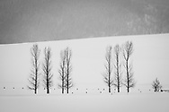 Bare trees outlined against the snow in a winter landscape.
