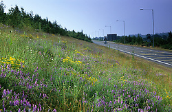 Wildflowers on roadside verge
