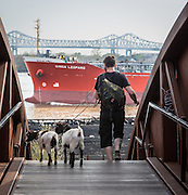 Goats and boats at Crescent Park, New Orleans