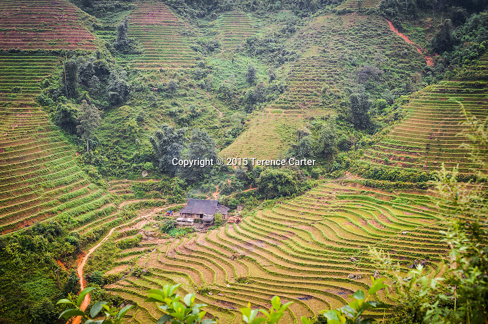 Terraced farms outside Sapa, Vietnam.