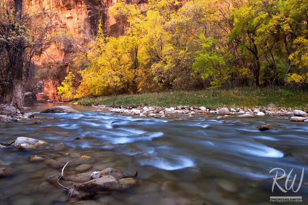 Virgin River and Fall Foliage, Zion National Park, Utah