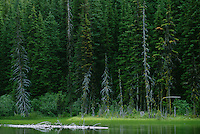 Evergreen forest at the edge of Nada Lake Central Cascade Mountains Washington USA