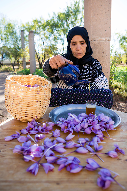 TALIOUINE, MOROCCO - October 25th 2015 - Amazigh Moroccan lady prepares saffron tea with freshly harvested stigmas at a saffron farm in Taliouine, Sirwa Mountain Range, Souss Massa Draa, Southern Morocco
