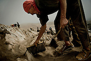 "Domingo Leon, 63, a Quechua from the higlands in Yungay collects guano in Guañape Norte Island in the coast off Peru, April 2009. They is using a brush and a ""rasqueta"", brushing the hill until the solid rock is exposed. The daily task is to collect around 35 sacks of 50kg."