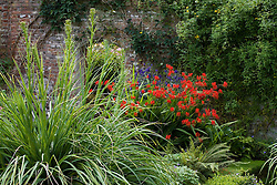 Crocosmia 'Lucifer' with Aconitum napellus 'Bergfurst' and Eryngium pandanifolium at Sissinghurst Castle Garden