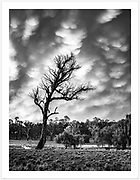 The drama of a late afternoon storm in the New England high country [Gostwyck, NSW, Australia]<br /> <br /> To purchase please email orders@girtbyseaphotography.com quoting the image number 301109, and your preferred print size. You will receive a quick reply recommending print media options to best suit your chosen image, plus an obligation-free quotation. Current standard size prices are published on the Pricing page.