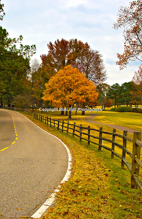 Fall colors near golf course in Germantown, TN.