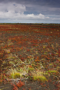 Near the Ring Road, a patch of volcanic sand has red grass growing on it