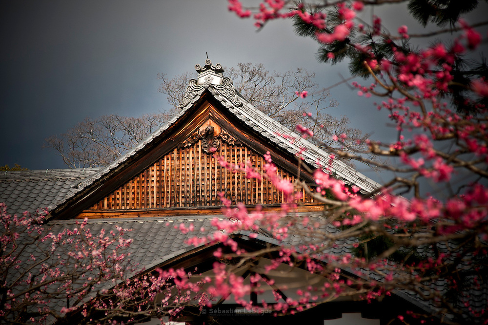 KYOTO, JAPAN - Kitano Tenmangu - Pink flowers from a prun blossom and roof of the Kitano tenmangu -  March 2011
