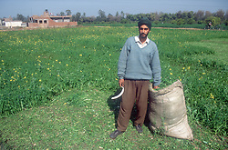 Farmer holding sickle standing next to sack full of produce in field of a mustard like crop used for animal feed,
