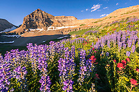 Lupine and Indian Paintbrush wildflowers cover the basin floor below the towering peak of Mt. Timpanogos in Utah's Wasatch Mountains.