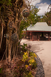 Baka (Banyan) Tree, Turtle Island, Yasawa Islands, Fiji
