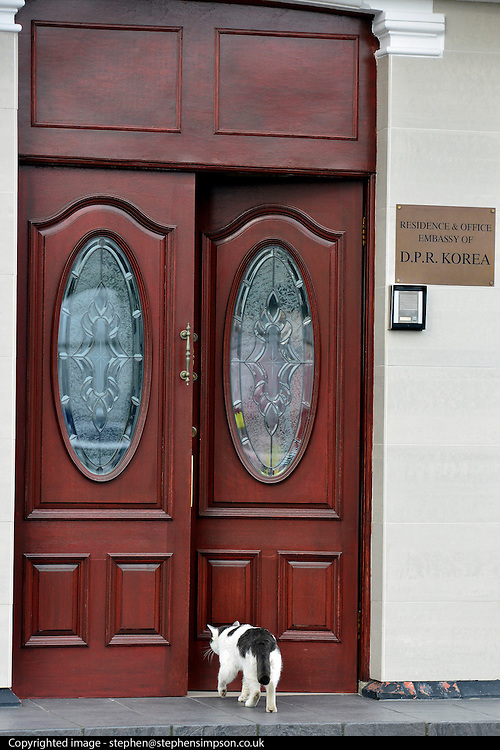© Licensed to London News Pictures. 08/04/2013. London, UK A cat enters the North Korean Embassy in Ealing in West London today, 8th April 2013. The Embassy is based in a 1920's detached house in a residential area. Tensions are high between countries around the world and the North Koreans. Photo credit : Stephen Simpson/LNP