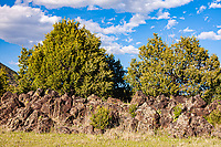 Rocky Mountain junipers, pinyon pines and a variety of bushes and shrubs    grow from a large lava flow from Capulin Volcano.  Capulin Volcano National Monument, New Mexico.  USA