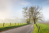 Sunrise along Sparks Lane within Cades Cove.  Cades Cove is part of Great Smoky Mountains National Park.