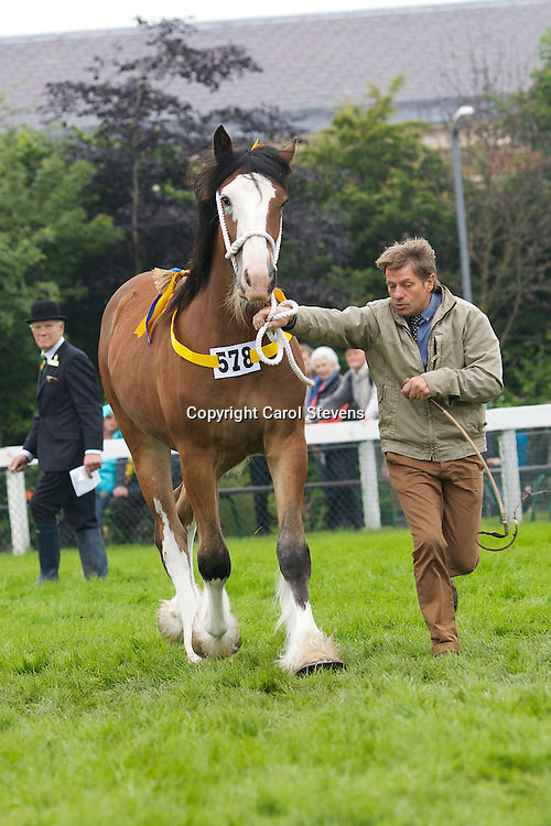 Winner of the Yearling Class<br /> Mr Wm Bedford's Bay Filly Yearling<br /> f  2011<br /> Landcliff Lorna <br /> Sired by Walton Supreme<br /> Dam  Landcliffe Wendy <br /> Bred by owner