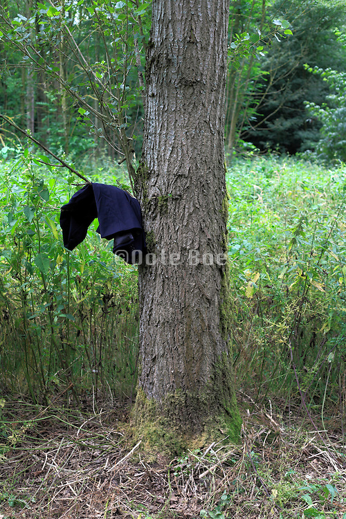 jacket hanging from twig of tree