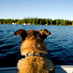 A dog looks out from a boat.