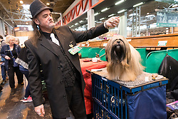 © Licensed to London News Pictures. 10/03/2016. Dog owners groom their Poodles in the dog benches area before a judging competition. Crufts celebrates its 12th anniversary as the Worlds largest dog show. Birmingham, UK. Photo credit: Ray Tang/LNP