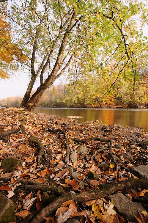 Fall color along the Grand River near Grand Ledge, Michigan