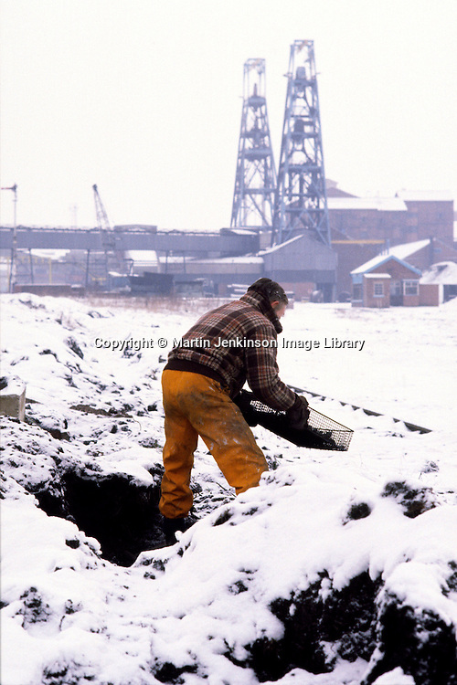 Striking miner digging for coal between railway lines at Hickleton Colliery during the 1984 miners strike ....