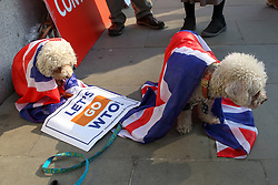 March 28, 2019 - London, UK, UK - London, UK. Couple dogs wrapped in Union Jack flags with a placard on the floor outside the Houses of Parliament. British Prime Minister Theresa May will seek a third vote on her Brexit deal on Friday 29 March 2019, subject to The Speaker, John Bercow's approval. (Credit Image: © Dinendra Haria/London News Pictures via ZUMA Wire)