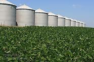 06: FARMS GREEN SOYBEAN FIELDS