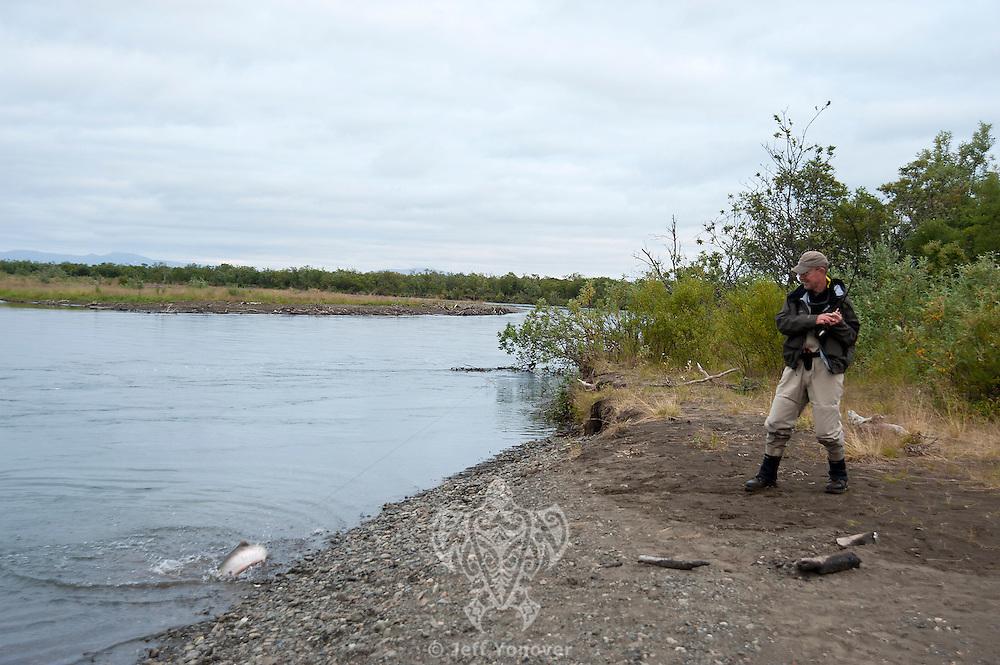 An angler fights a Silver Salmon fresh from the ocean...shot on the Kanektok River, Alaska, USA..