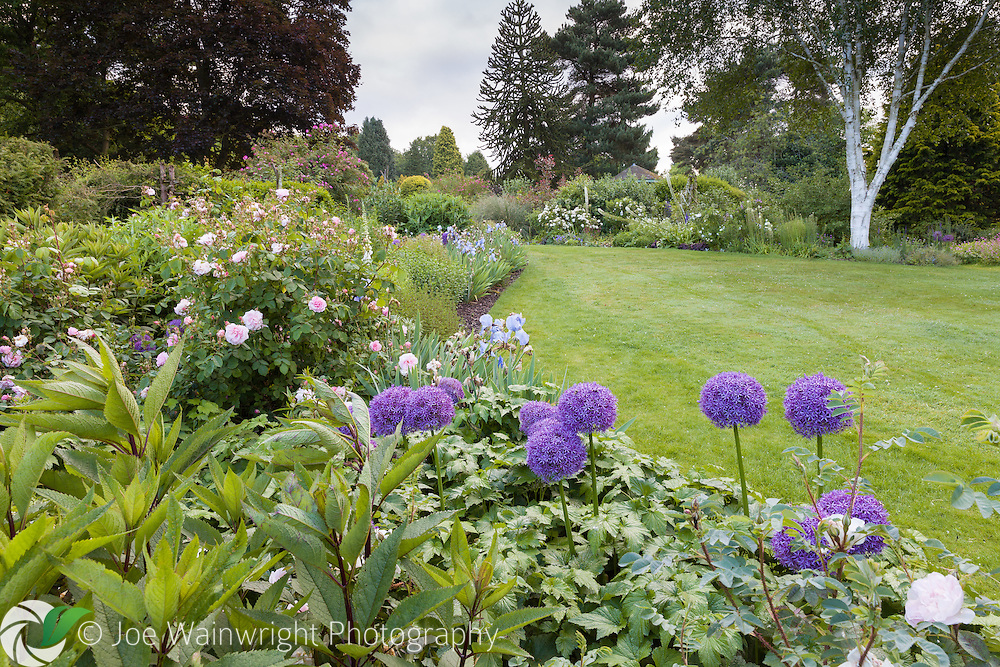 Alliums, irises and roses mingle in a June border at Dorothy Clive Garden, Staffordshire.
