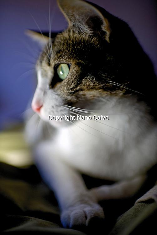 Interior portrait of cat