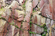 Derbyshire, UK - Aug 2015 : Natural pattern or red and brown cliff face cracked with green plants on 28 Aug at Burbage South Edge, Peak District