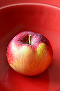 McIntosh Apple in red bowl, Malus domestica