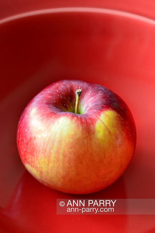 McIntosh Apple in red bowl, Malus domestica