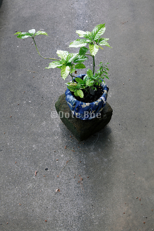 young green plant in a pot on a concrete underground