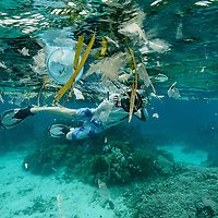 Mesoamerican Reef. Little Cay, Utila, Honduras. A big amount of plastic  transported by the winds and currents came suddenly on a coral reef in great condition. The plastic is a universal problem.