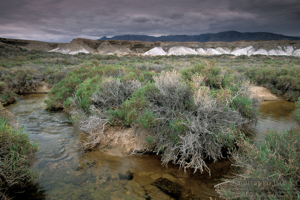 Rain stom clouds over vegetation Salt Creek, Death Valley National Park, California