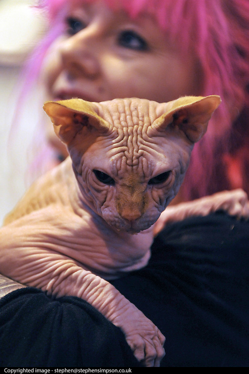 © Licensed to London News Pictures. 19/11/2011, Birmingham, UK.  Maddox, the Sphynx Cat with his owner. A healthy Sphynx cat's fur should feel like a warm peach to the touch. The Supreme Cat Show held today, 19 November in the National Exhibition Centre, Birmingham.  The event is a highlight in the cat show calendar and is regarded as the feline equivalent of Crufts. Photo credit : Stephen Simpson/LNP