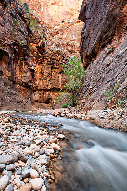 Virgin River, Zion National Park, Utah.<br /> <br /> Zion is steeped in Biblical nomenclature.  The word itself is Hebrew for sanctuary or refuge.  Spanish explorers named the river for the Virgin Mary.  The Temples, the Patriarchs, Cathedral, Angel's Landing...all testify to the inspired faithful who got to name this place.   The road ends at the Temple of Sinwava, but one of the premier hikes anywhere begins here.  The trail ended when the river spread cliff to cliff, and after a shriveling slog through cold water up to my armpits, with my gear in my daypack, gripped over my head, I hoped the desert air would dry me fast as I followed the canyon upriver.  The thin blue vault above is surrounded by impossibly high cliffs, selectively sunlit, lighting surrounding cliffs in turn with bounced wavelengths.  The colors were brilliant and subtle at once, changing as the sun tracked across the outside world.  This is the heart of Zion, the river the life blood in an artery feeding the desert.  It is primal and stays that way, the frequent floods scouring out the imprint of man.  Here between these narrowing walls, it is hard not to be humbled.  The Narrows may not be so-named, but they deserve biblical respect. <br /> <br /> This is a vertical stitch of three images, processed in Photoshop and cropped to format.