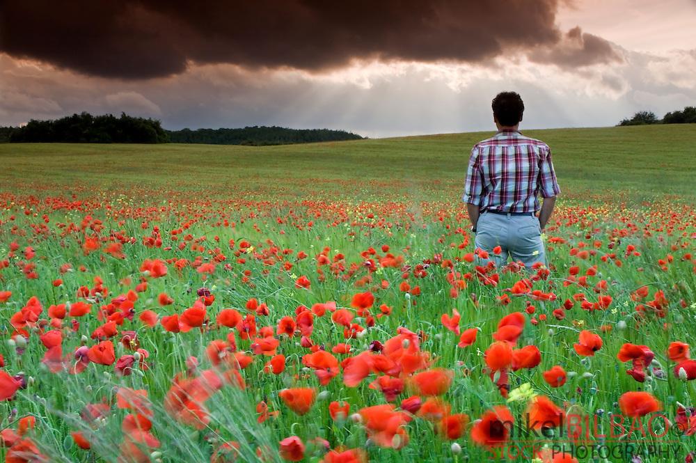 Man watching storm clouds on a poppy field (Papaver rhoeas).<br /> Ayegui, Navarre, Spain, Europe