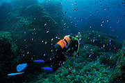 Diver within a school of Damselfish, San Pietro Island, Italy