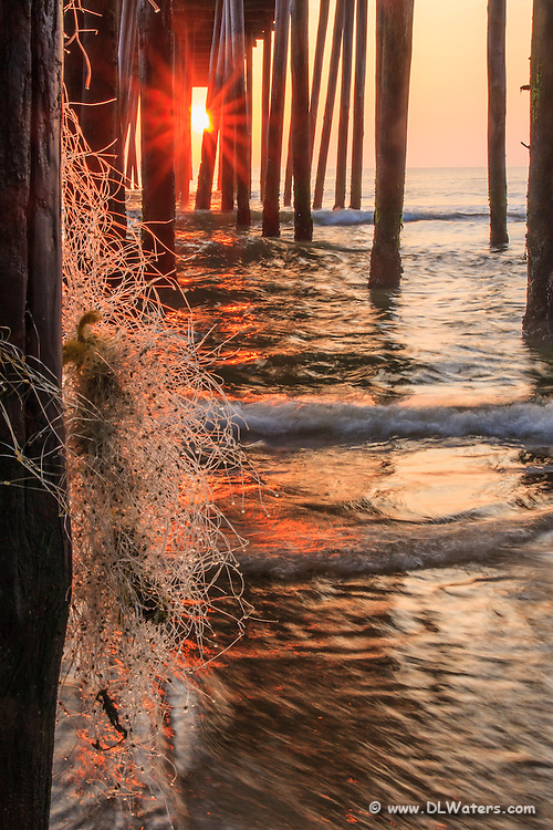 Sunrise shining through fishnet caught on Kitty Hawk peers pilings.