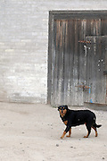 A stray dog wanders about the buildings in Salome, Arizona.