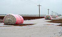 Bales of freshly harvested cotton lie in floodwaters caused by Hurricane Harvey near Seadrift, Texas August 26, 2017. REUTERS/Rick Wilking
