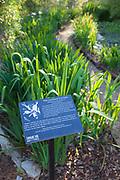 Longue Vue House & Gardens; March 14, 2012