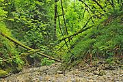 Lush growth in coastal forest <br /> Goldstream Provincial Park<br /> British Columbia<br /> Canada