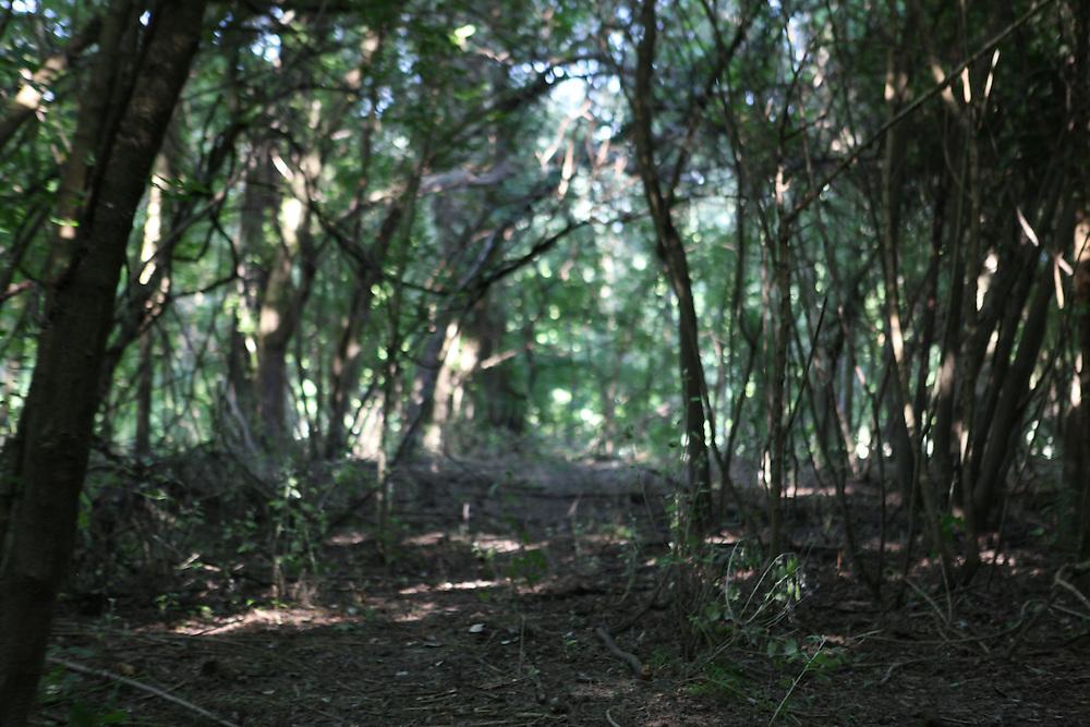 A few km from Liberland: the woods by the Danube river are infested by mosquitoes / A quelques kilomètres à pied de Liberland : le terrain, en majorité des sous-bois, est infesté de moustiques.