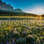 sun rise mountains many glacier valley glacier national park